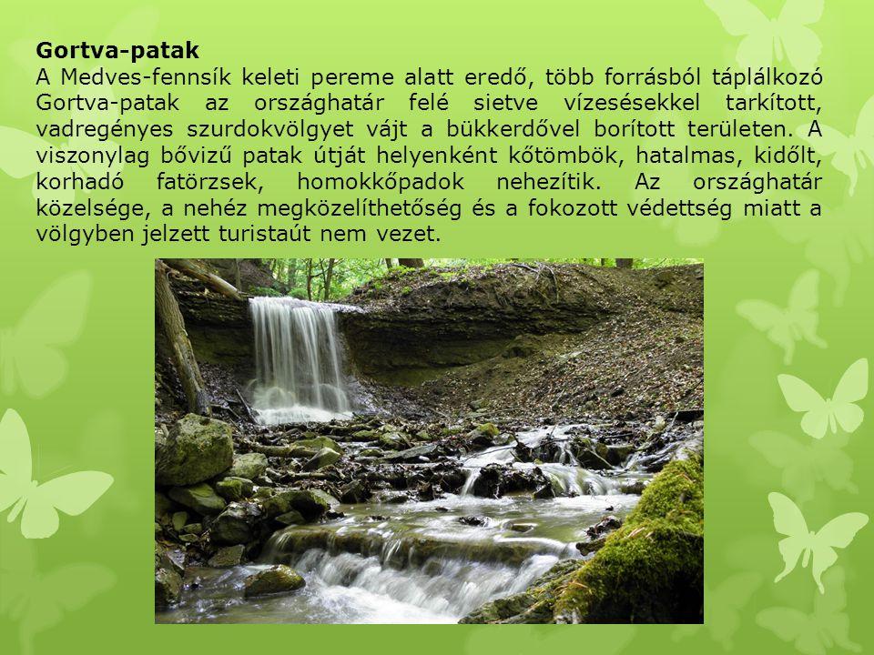 Gortva-patak A Medves-fennsík keleti pereme alatt eredő, több forrásból táplálkozó Gortva-patak az országhatár felé sietve vízesésekkel tarkított, vad