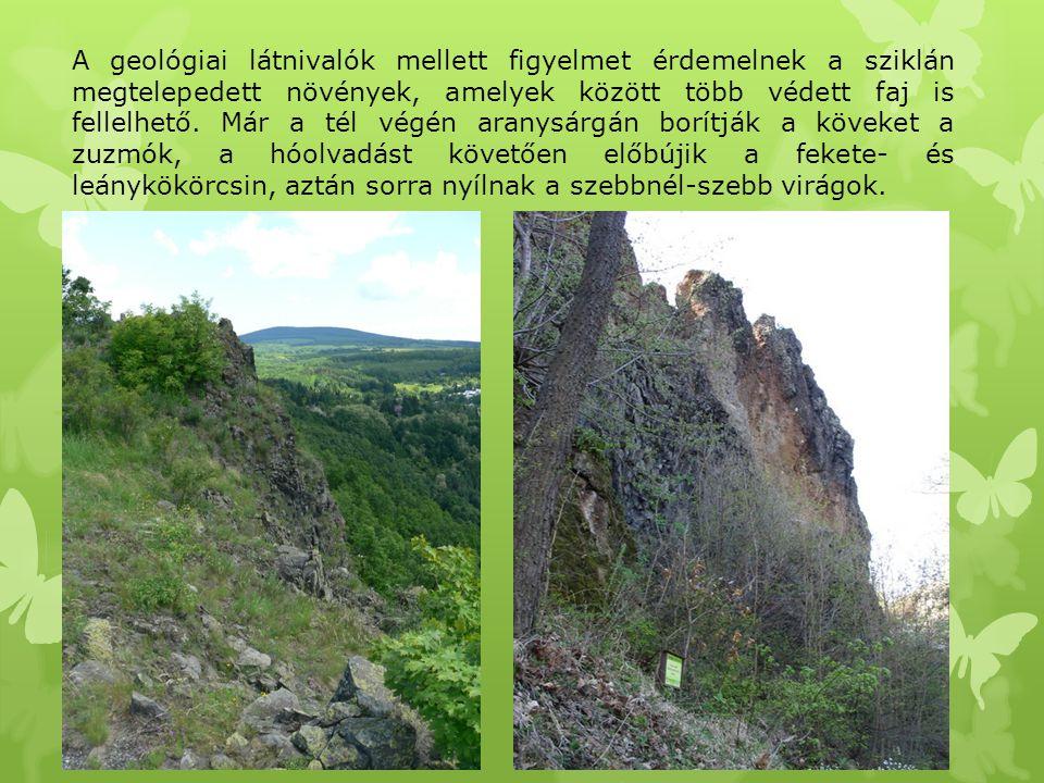 A geológiai látnivalók mellett figyelmet érdemelnek a sziklán megtelepedett növények, amelyek között több védett faj is fellelhető. Már a tél végén ar