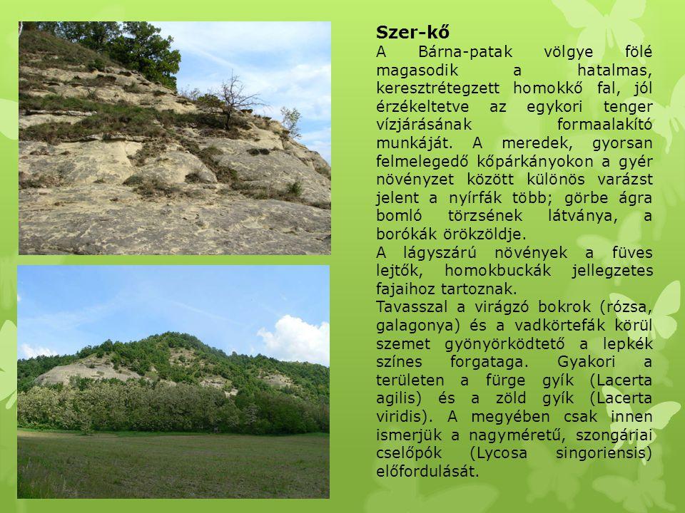 Szer-kő A Bárna-patak völgye fölé magasodik a hatalmas, keresztrétegzett homokkő fal, jól érzékeltetve az egykori tenger vízjárásának formaalakító mun