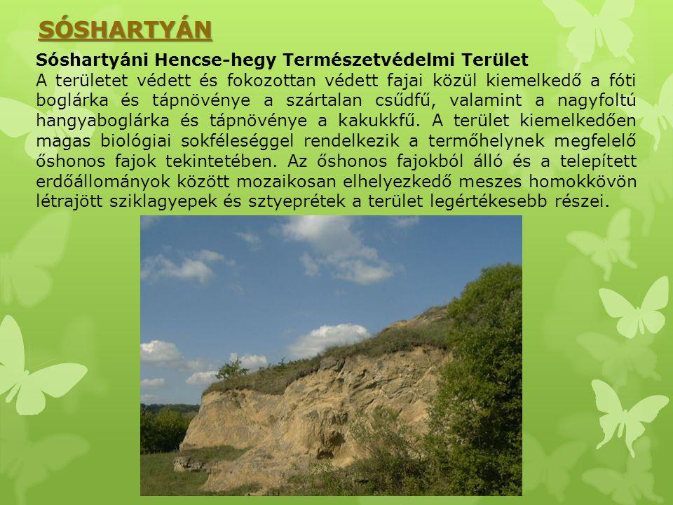 Sóshartyáni Hencse-hegy Természetvédelmi Terület A területet védett és fokozottan védett fajai közül kiemelkedő a fóti boglárka és tápnövénye a szárta