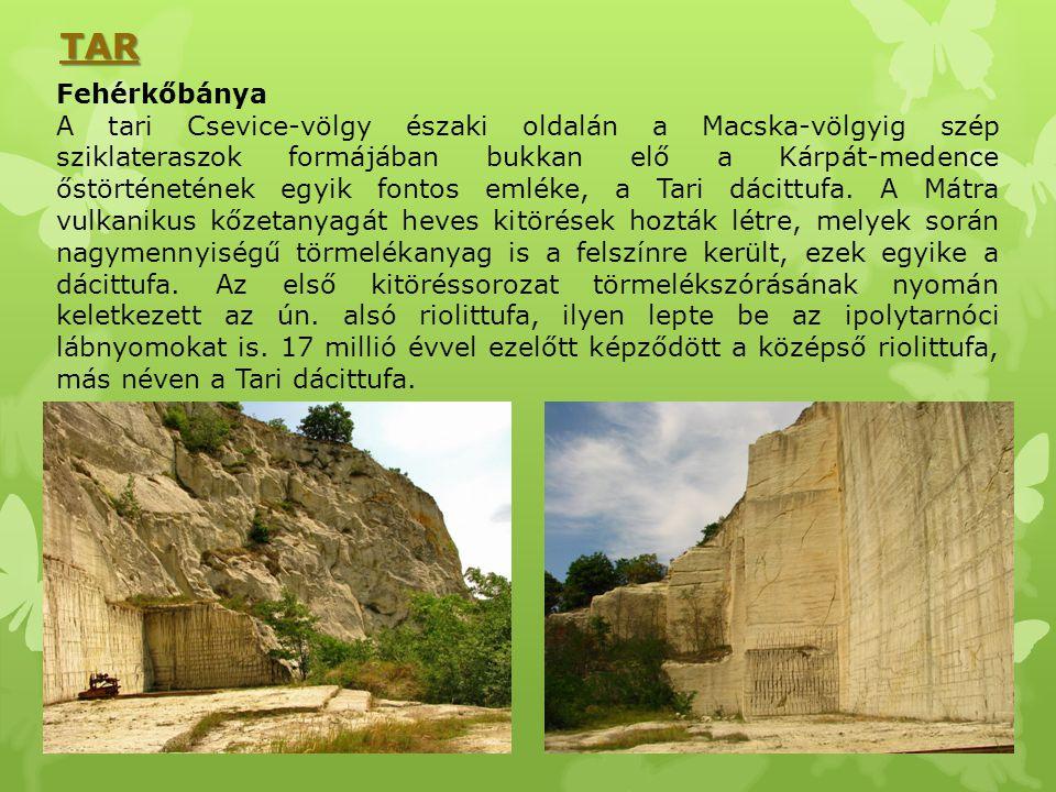 Fehérkőbánya A tari Csevice-völgy északi oldalán a Macska-völgyig szép sziklateraszok formájában bukkan elő a Kárpát-medence őstörténetének egyik font