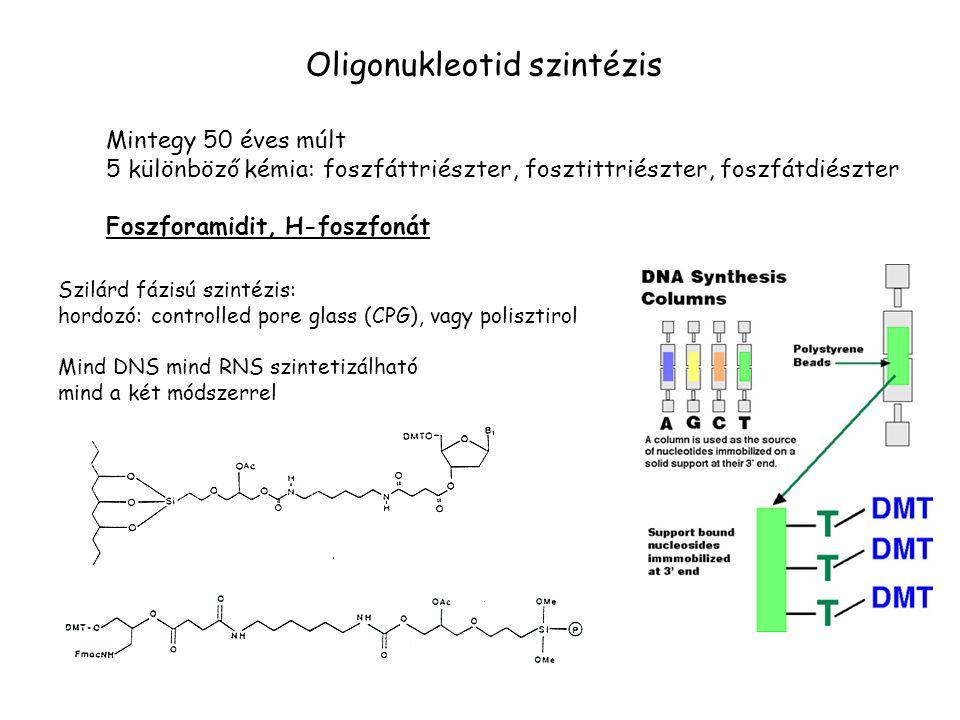 Oligonukleotid szintézis Mintegy 50 éves múlt 5 különböző kémia: foszfáttriészter, fosztittriészter, foszfátdiészter Foszforamidit, H-foszfonát Szilár