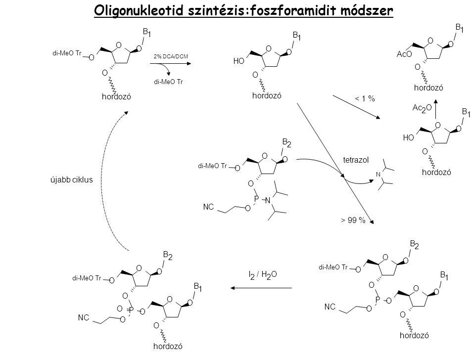 Oligonukleotid szintézis: H-FOSZFONÁT MÓDSZER Előny: az oxidációt elég a végén elvégezni, vagy – igény szerint – el sem kell  töltés nélküli molekula  Könnyebben átmegy a sejtfalon/membránon