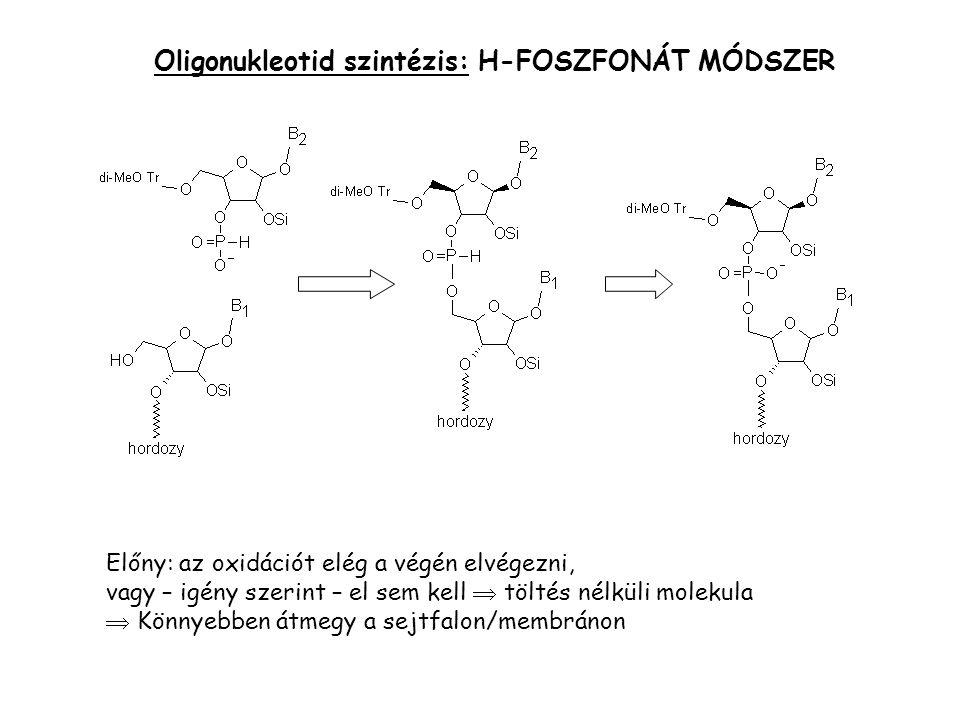 Ar1Ar2 ori Ar2 Ar1 Ar2 oriV Gének irányított szétroncsolása interpozon mutagenezis poláris hatás vad típus mutáns oriT oriV: szűk gazdaspecificitás Ar: antibiotikum rezisztencia