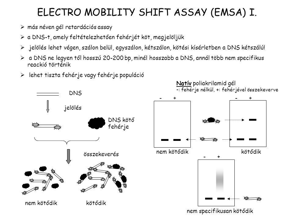 ELECTRO MOBILITY SHIFT ASSAY (EMSA) I.  más néven gél retardációs assay  a DNS-t, amely feltételezhetően fehérjét köt, megjelöljük  jelölés lehet v