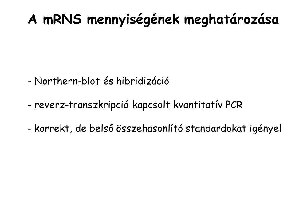 - Northern-blot és hibridizáció - reverz-transzkripció kapcsolt kvantitatív PCR - korrekt, de belső összehasonlító standardokat igényel A mRNS mennyis