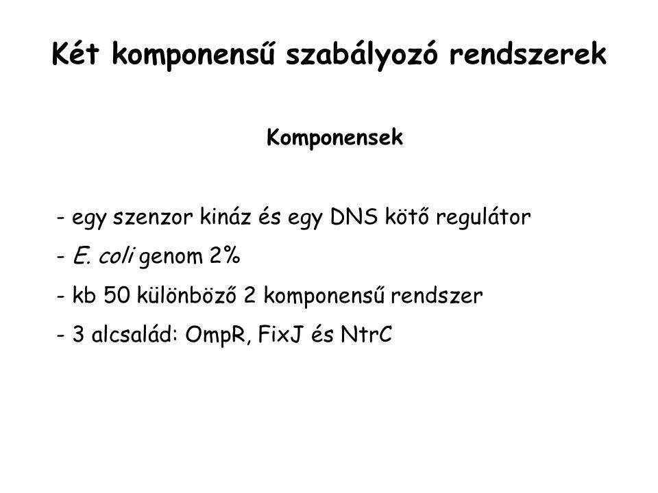 Komponensek - egy szenzor kináz és egy DNS kötő regulátor - E. coli genom 2% - kb 50 különböző 2 komponensű rendszer - 3 alcsalád: OmpR, FixJ és NtrC