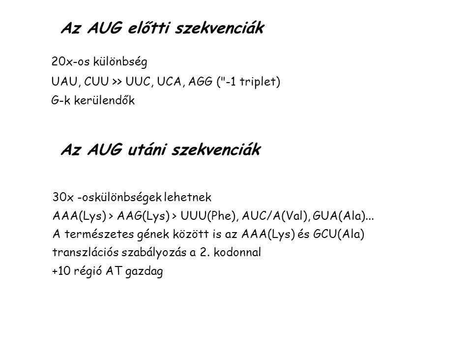 Az AUG előtti szekvenciák 20x-os különbség UAU, CUU >> UUC, UCA, AGG (