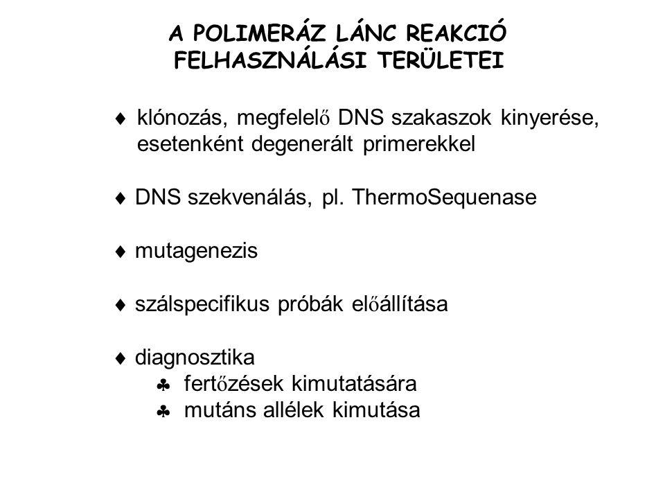 FEHÉRJE TERMELTETŐ RENDSZEREK PROKARIÓTÁK E.