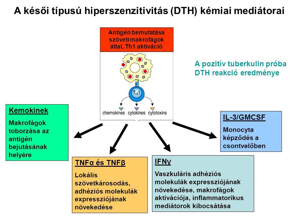 A késői típusú hiperszenzitivitás (DTH) kémiai mediátorai A pozitív tuberkulin próba DTH reakció eredménye Kemokinek Makrofágok toborzása az antigén bejutásának helyére IFNγ Vaszkuláris adhéziós molekulák expressziójának növekedése, makrofágok aktivációja, inflammatorikus mediátorok kibocsátása TNFα és TNFβ Lokális szövetkárosodás, adhéziós molekulák expressziójának növekedése IL-3/GMCSF Monocyta képződés a csontvelőben Antigén bemutatása szöveti makrofágok által, Th1 aktiváció