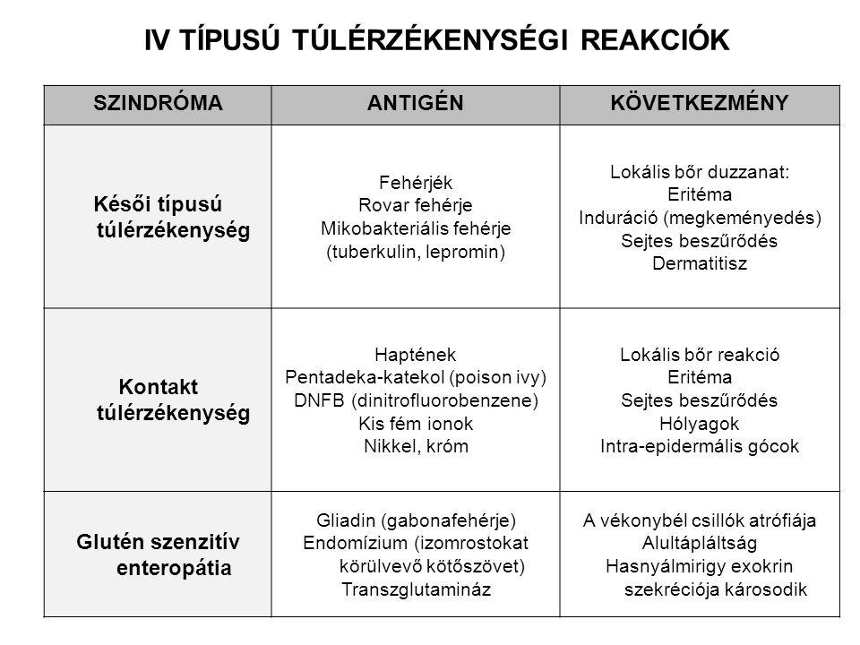 IV TÍPUSÚ TÚLÉRZÉKENYSÉGI REAKCIÓK SZINDRÓMAANTIGÉNKÖVETKEZMÉNY Késői típusú túlérzékenység Fehérjék Rovar fehérje Mikobakteriális fehérje (tuberkulin, lepromin) Lokális bőr duzzanat: Eritéma Induráció (megkeményedés) Sejtes beszűrődés Dermatitisz Kontakt túlérzékenység Haptének Pentadeka-katekol (poison ivy) DNFB (dinitrofluorobenzene) Kis fém ionok Nikkel, króm Lokális bőr reakció Eritéma Sejtes beszűrődés Hólyagok Intra-epidermális gócok Glutén szenzitív enteropátia Gliadin (gabonafehérje) Endomízium (izomrostokat körülvevő kötőszövet) Transzglutamináz A vékonybél csillók atrófiája Alultápláltság Hasnyálmirigy exokrin szekréciója károsodik