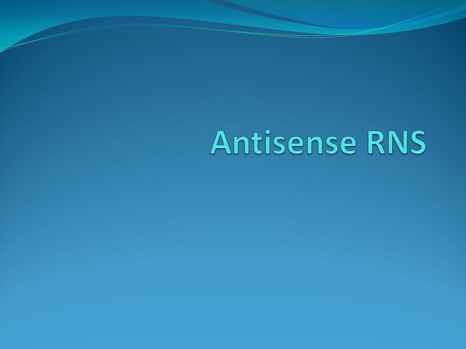 """Antisense RNS Az értelmes mRNS szállal """"szemben egy komplementer szál szintetizálódik Ilyenkor a transzláció blokkolódik."""