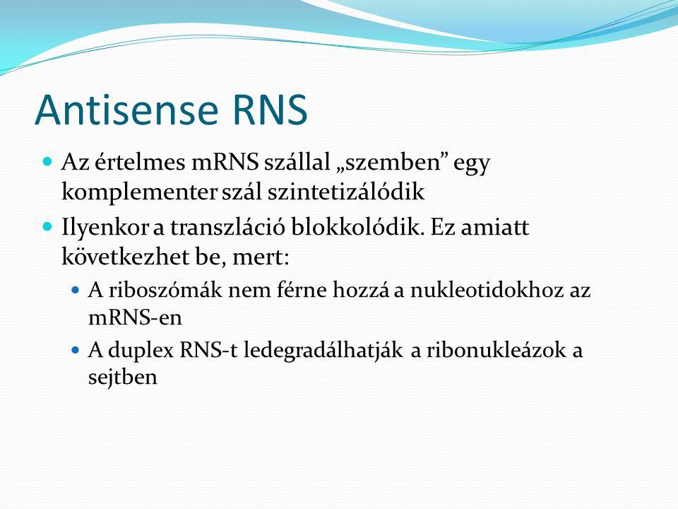 """Antisense RNS Az értelmes mRNS szállal """"szemben"""" egy komplementer szál szintetizálódik Ilyenkor a transzláció blokkolódik. Ez amiatt következhet be, m"""