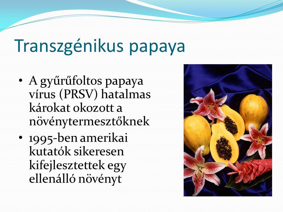 Transzgénikus papaya A gyűrűfoltos papaya vírus (PRSV) hatalmas károkat okozott a növénytermesztőknek 1995-ben amerikai kutatók sikeresen kifejlesztet
