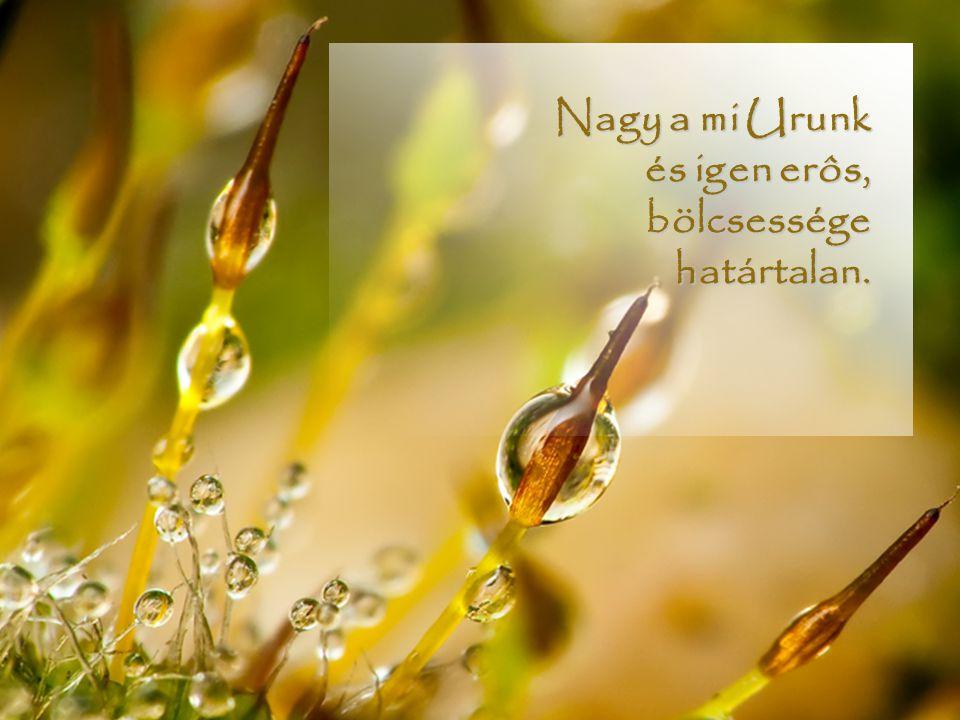 Nagy a mi Urunk és igen erôs, bölcsessége határtalan.