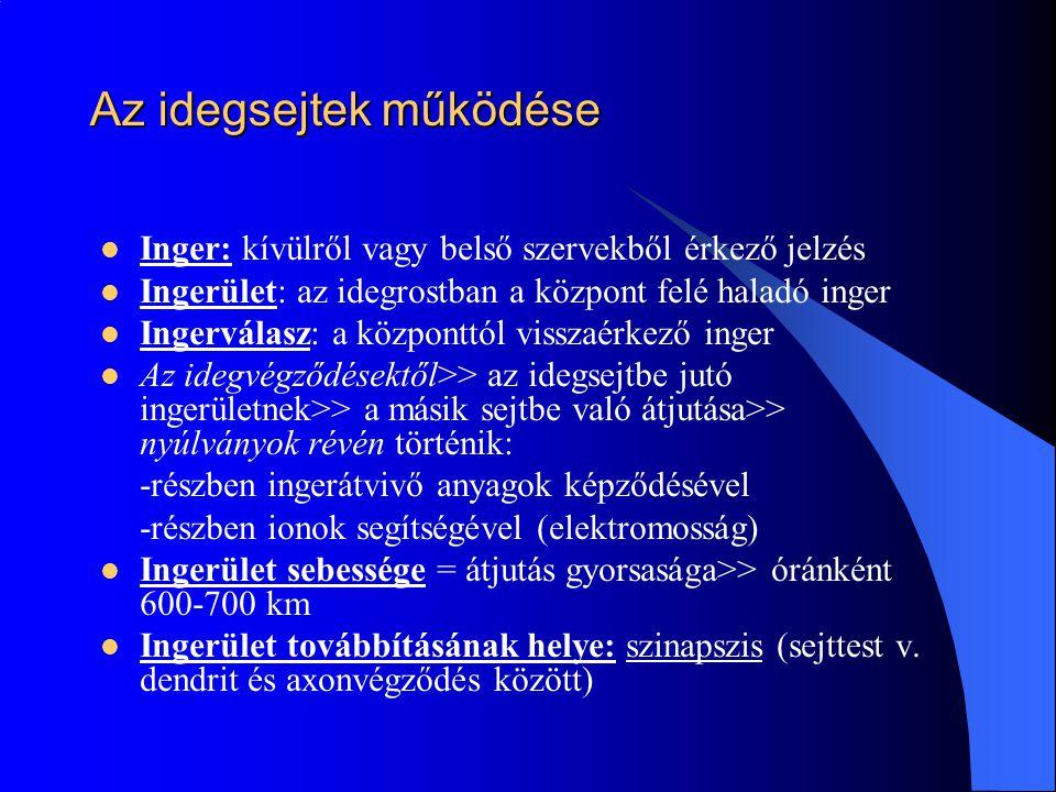Az idegsejtek működése Inger: kívülről vagy belső szervekből érkező jelzés Ingerület: az idegrostban a központ felé haladó inger Ingerválasz: a közpon