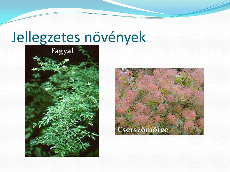 Jellegzetes növények Cserszömörce Fagyal