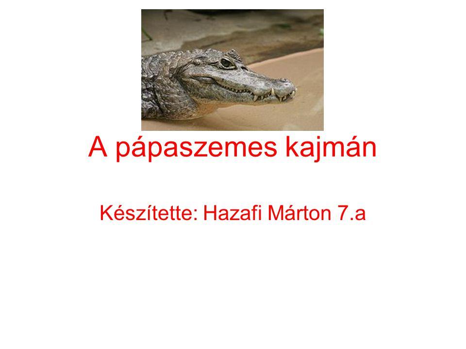 A pápaszemes kajmán Készítette: Hazafi Márton 7.a