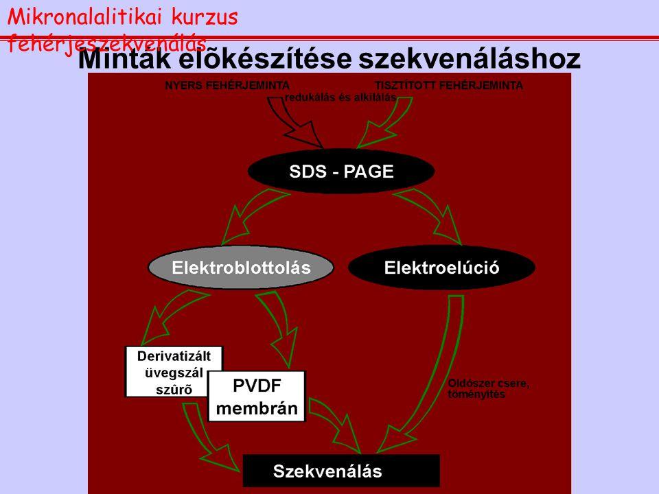 A fenilizotiocianátos lebontás: az Edman reakció Mikronalalitikai kurzus fehérjeszekvenálás