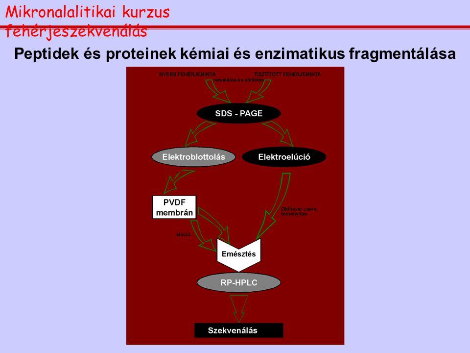 Minták elõkészítése szekvenáláshoz Mikronalalitikai kurzus fehérjeszekvenálás