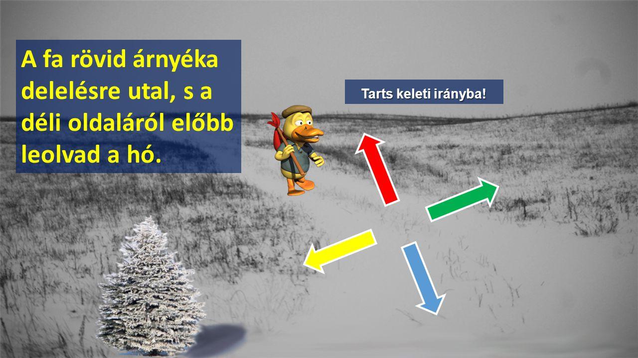 Tarts keleti irányba! A fa rövid árnyéka delelésre utal, s a déli oldaláról előbb leolvad a hó.