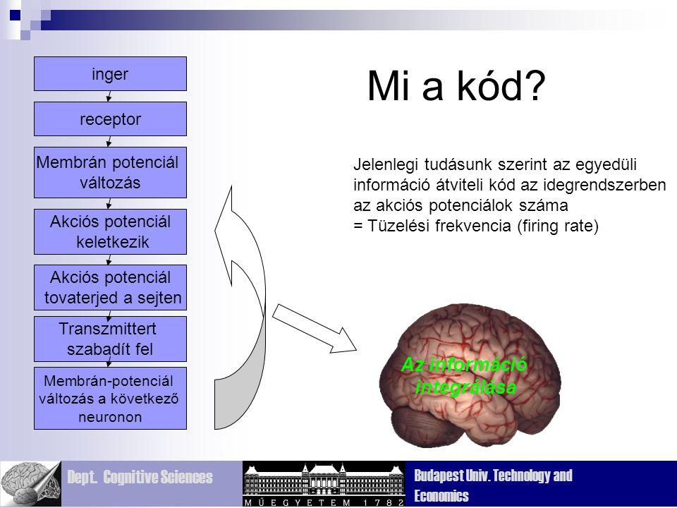 Dept. Cognitive Sciences Budapest Univ. Technology and Economics Jelenlegi tudásunk szerint az egyedüli információ átviteli kód az idegrendszerben az
