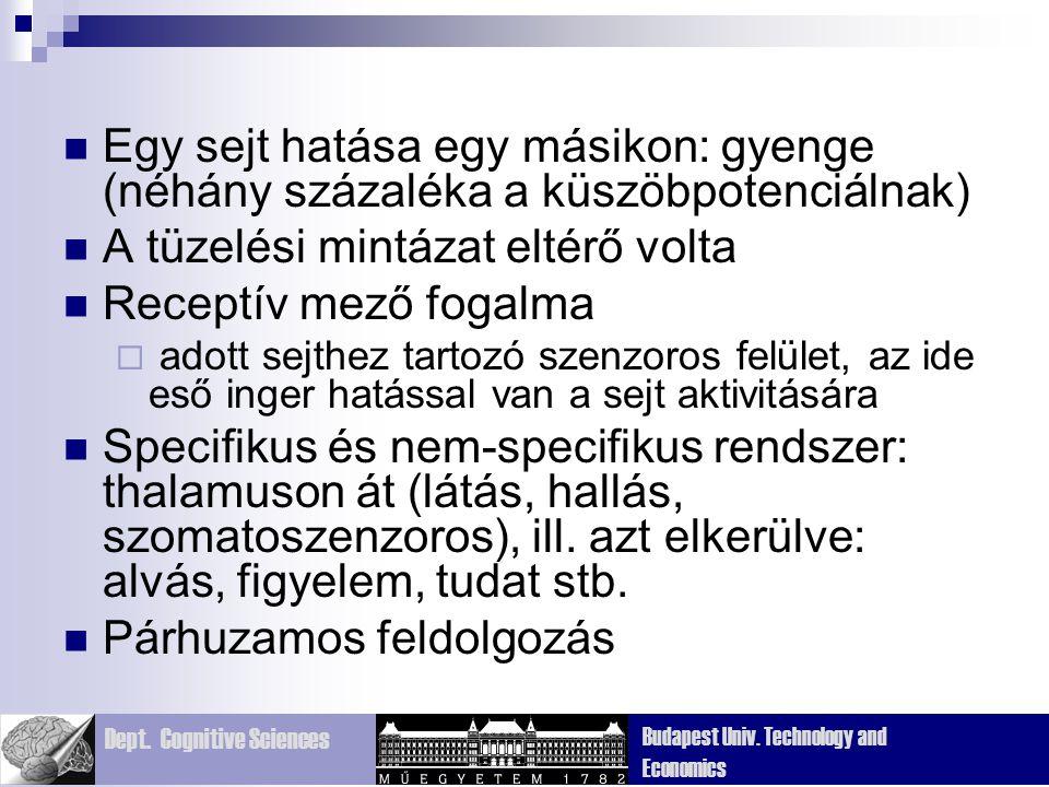 Dept. Cognitive Sciences Budapest Univ. Technology and Economics Egy sejt hatása egy másikon: gyenge (néhány százaléka a küszöbpotenciálnak) A tüzelés