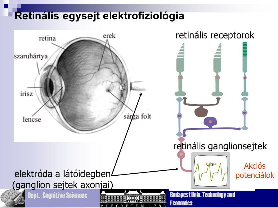 Dept. Cognitive Sciences Budapest Univ. Technology and Economics Retinális egysejt elektrofiziológia elektróda a látóidegben (ganglion sejtek axonjai)