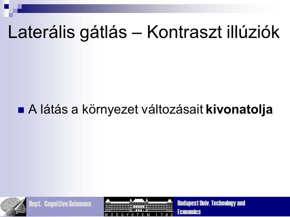 Dept. Cognitive Sciences Budapest Univ. Technology and Economics Laterális gátlás – Kontraszt illúziók A látás a környezet változásait kivonatolja