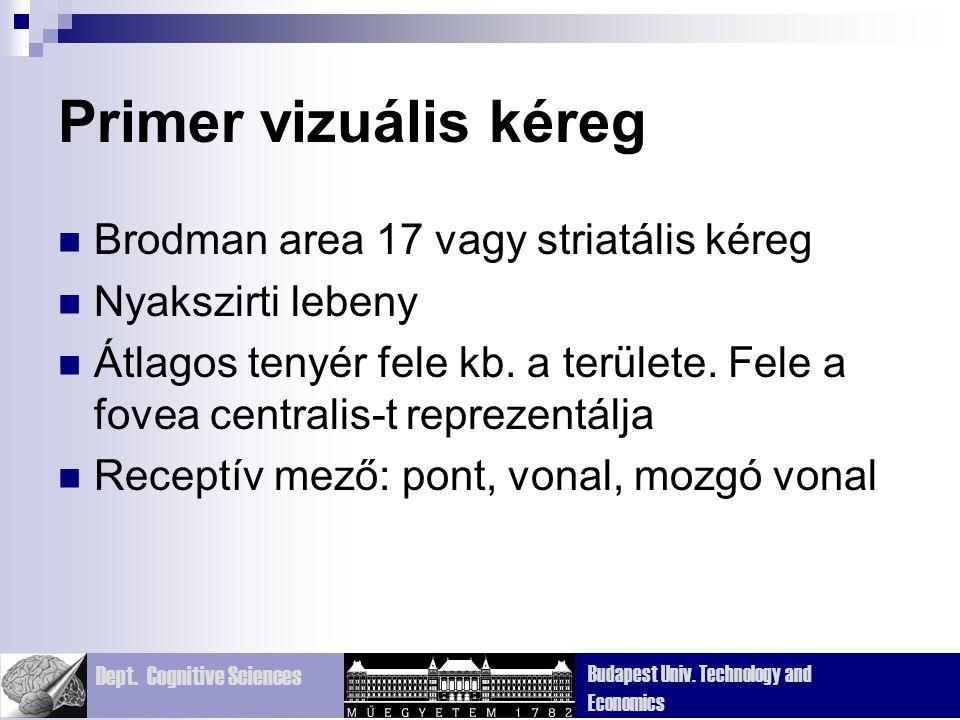 Dept. Cognitive Sciences Budapest Univ. Technology and Economics Primer vizuális kéreg Brodman area 17 vagy striatális kéreg Nyakszirti lebeny Átlagos