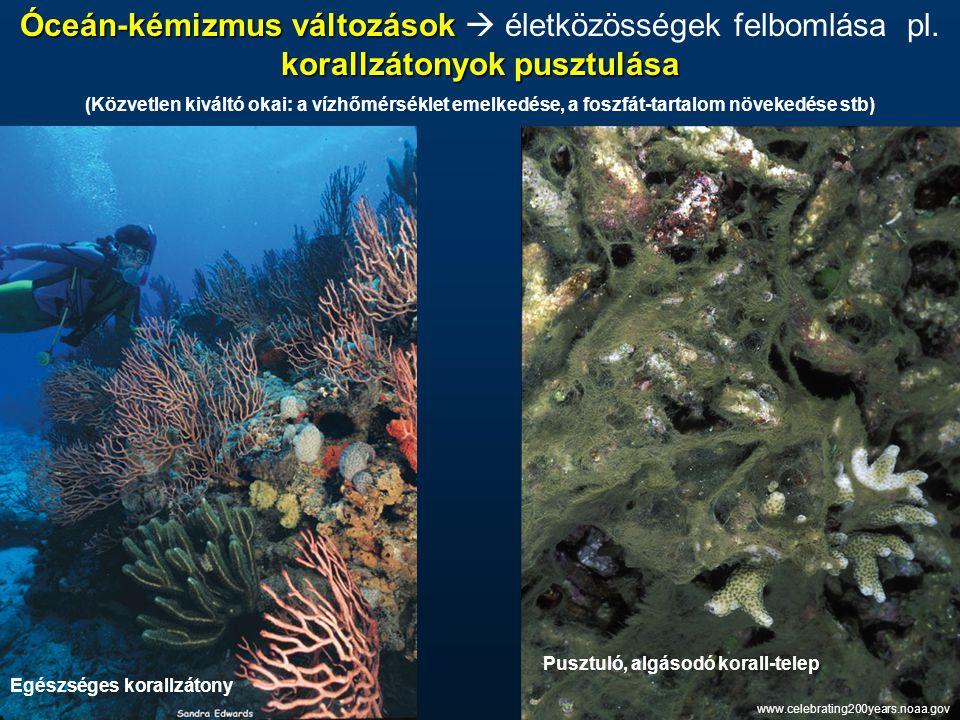 Óceán-kémizmus változások korallzátonyok pusztulása Óceán-kémizmus változások  életközösségek felbomlása pl. korallzátonyok pusztulása (Közvetlen kiv