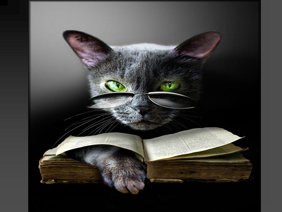 Most egyszerűen nézz az én macska-szemeimbe és gondolj a kiválasztott kártyára.