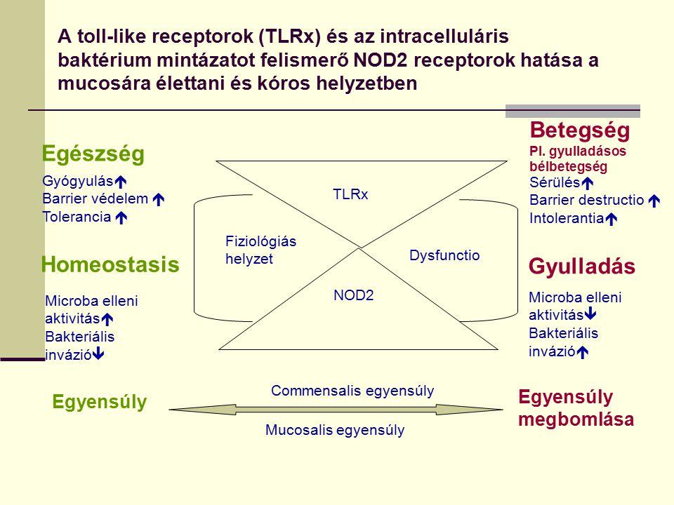 A toll-like receptorok (TLRx) és az intracelluláris baktérium mintázatot felismerő NOD2 receptorok hatása a mucosára élettani és kóros helyzetben TLRx