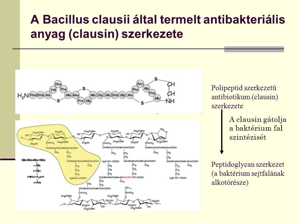 A Bacillus clausii által termelt antibakteriális anyag (clausin) szerkezete Polipeptid szerkezetű antibiotikum (clausin) szerkezete Peptidoglycan szer