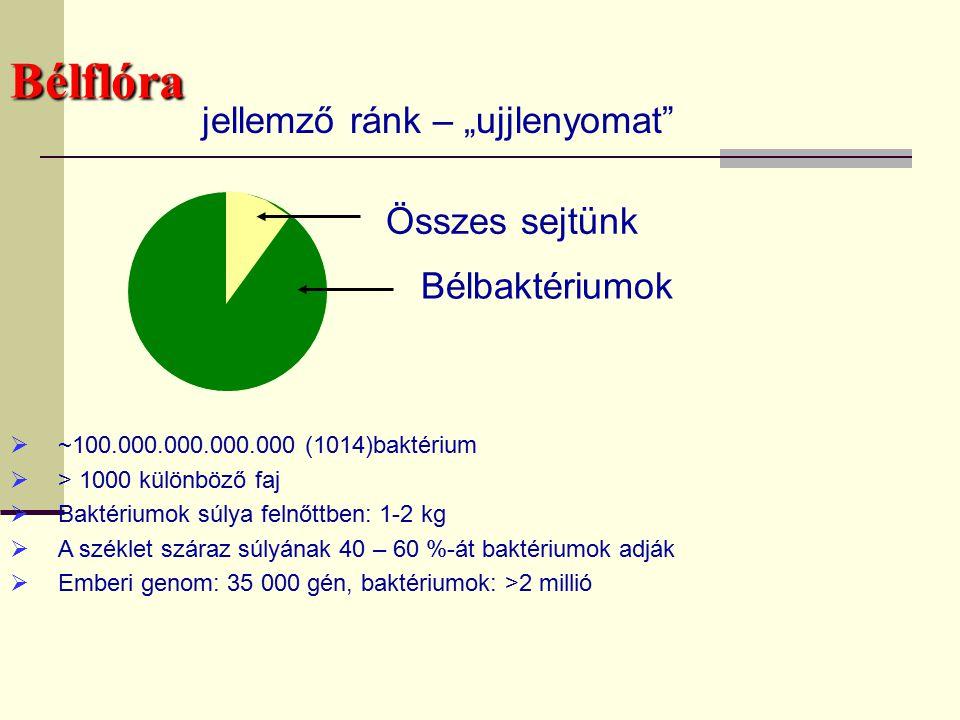 Baktériumok száma a bélben 10 14 10 13 A test sejtjeinek száma Proximális vastagbél Disztális vastagbél Lassú fermentációs arány Csökkent tápanyag-felszívódás Végtermék koncentrációjának csökkenése Aktív szénhidrát -bontás helye Alacsony PH (c.a.5.5/6.0) Gyors felszívódás - Kis molekulasúlyú szénhidrátok bontása - Semlegesebb PH - Nagyobb fehérjebontás A felső gasztro- intesztinális traktusokból fel nem szívódott tápanyagok bontása
