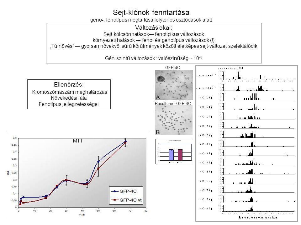 """Sejt-klónok fenntartása geno-, fenotípus megtartása folytonos osztódások alatt Változás okai: Sejt-kölcsönhatások → fenotipikus változások környezeti hatások → feno- és genotípus változások (!) """"Túlnövés → gyorsan növekvő, sűrű körülmények között életképes sejt-változat szelektálódik Gén-szintű változások : valószínűség ~ 10 -8 Ellenőrzés: Kromoszómaszám meghatározás Növekedési ráta Fenotípus jellegzetességei GFP-4C Recultured GFP-4C MTT"""