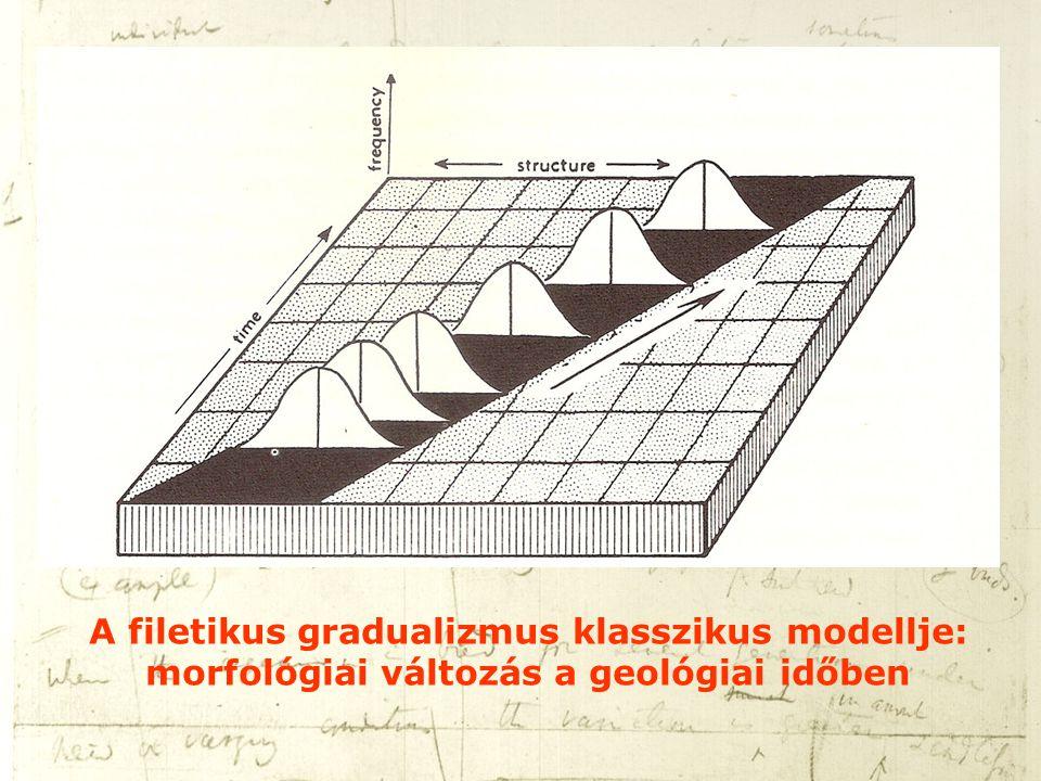 A filetikus gradualizmus klasszikus modellje: morfológiai változás a geológiai időben