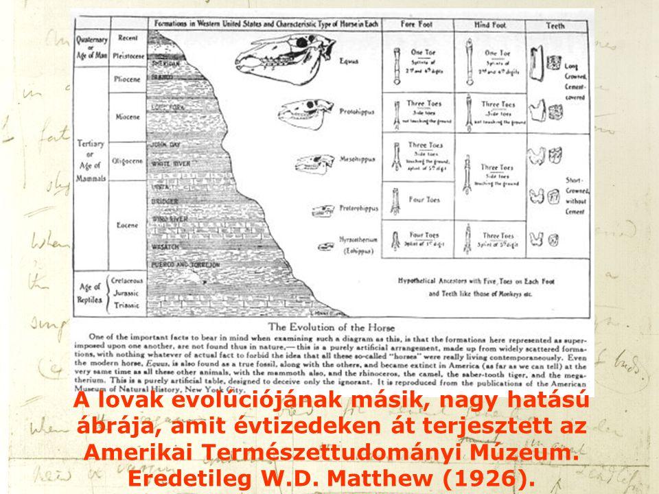 A lovak evolúciójának másik, nagy hatású ábrája, amit évtizedeken át terjesztett az Amerikai Természettudományi Múzeum. Eredetileg W.D. Matthew (1926)