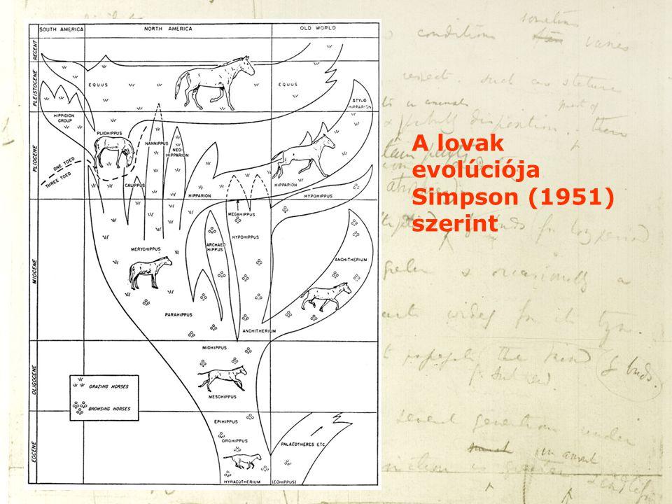 A lovak evolúciója Simpson (1951) szerint