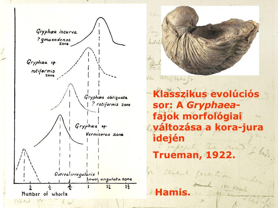 Klasszikus evolúciós sor: A Gryphaea- fajok morfológiai változása a kora-jura idején Trueman, 1922. Hamis.