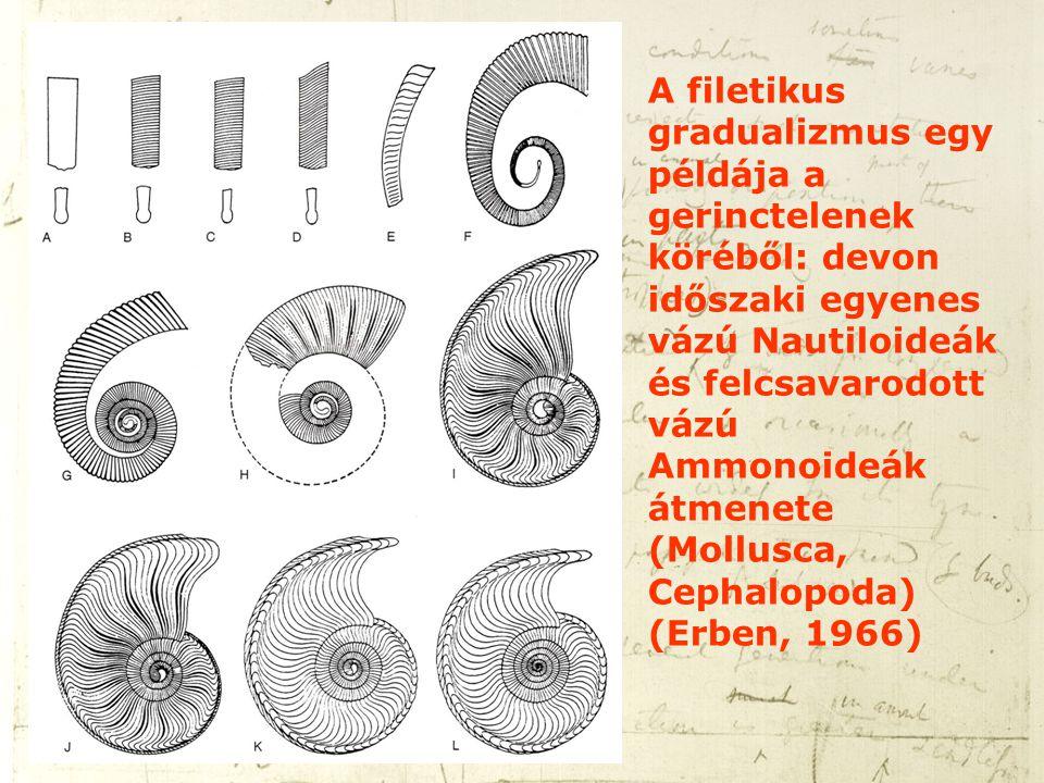 A filetikus gradualizmus egy példája a gerinctelenek köréből: devon időszaki egyenes vázú Nautiloideák és felcsavarodott vázú Ammonoideák átmenete (Mo
