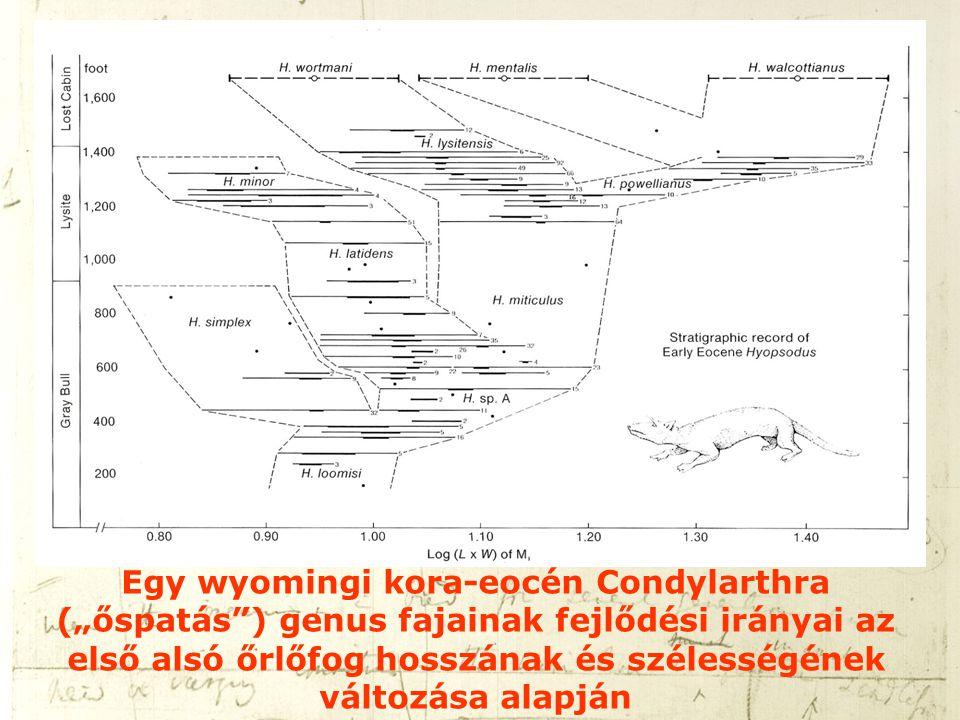 """Egy wyomingi kora-eocén Condylarthra (""""őspatás"""") genus fajainak fejlődési irányai az első alsó őrlőfog hosszának és szélességének változása alapján"""