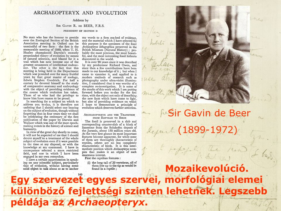 Sir Gavin de Beer (1899-1972) Mozaikevolúció. Egy szervezet egyes szervei, morfológiai elemei különböző fejlettségi szinten lehetnek. Legszebb példája