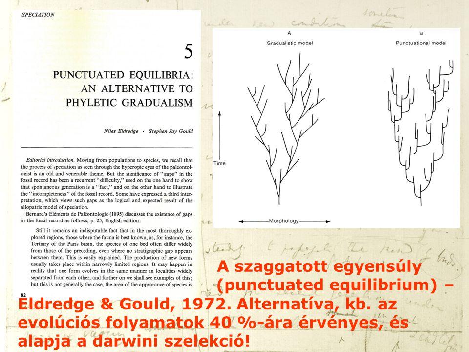 A szaggatott egyensúly (punctuated equilibrium) – Eldredge & Gould, 1972. Alternatíva, kb. az evolúciós folyamatok 40 %-ára érvényes, és alapja a darw