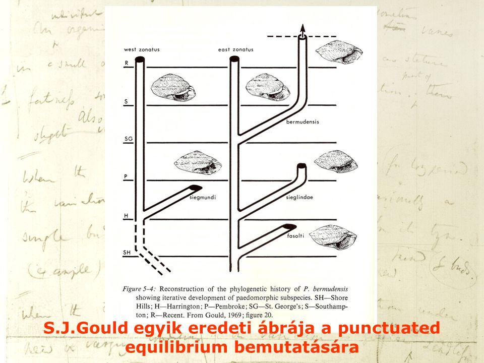 S.J.Gould egyik eredeti ábrája a punctuated equilibrium bemutatására