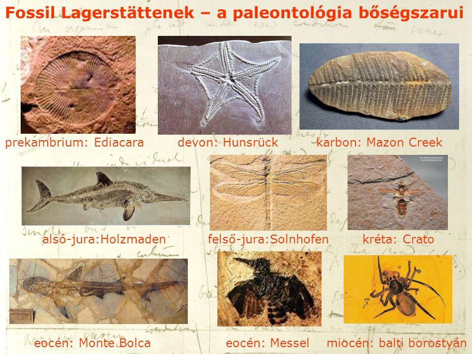 Fossil Lagerstättenek – a paleontológia bőségszarui prekambrium: Ediacara devon: Hunsrück karbon: Mazon Creek alsó-jura:Holzmaden felső-jura:Solnhofen