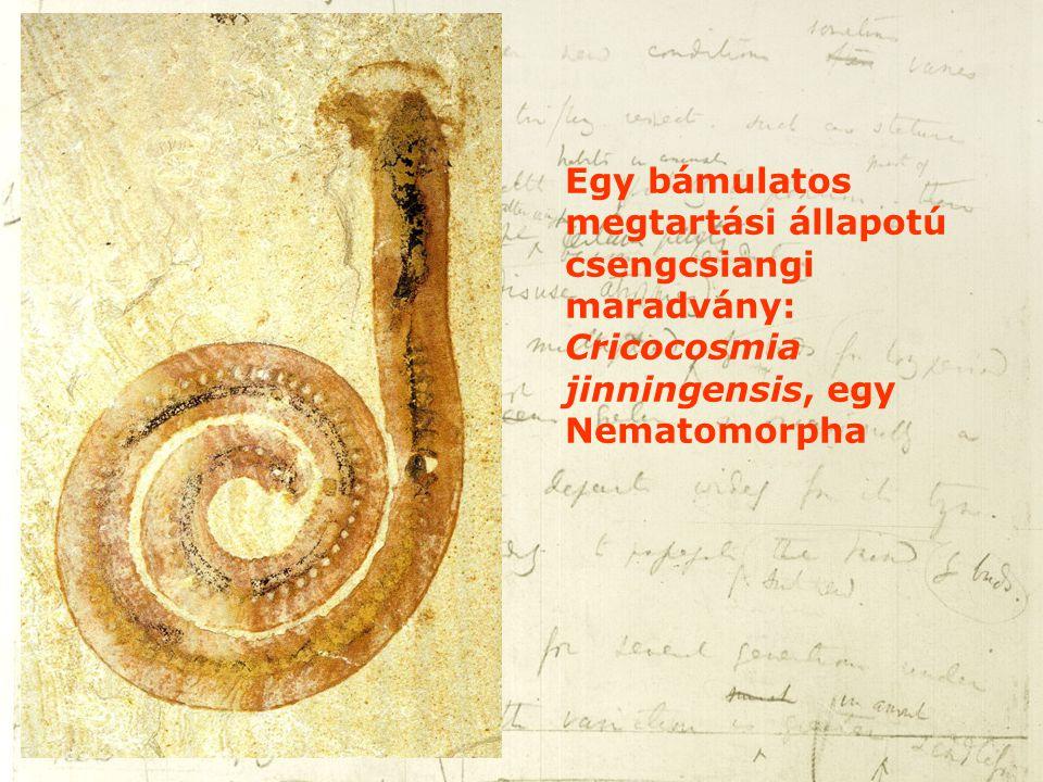 Egy bámulatos megtartási állapotú csengcsiangi maradvány: Cricocosmia jinningensis, egy Nematomorpha