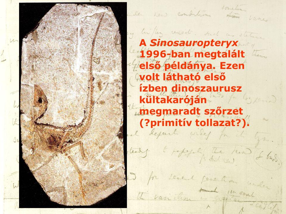A Sinosauropteryx 1996-ban megtalált első példánya. Ezen volt látható első ízben dinoszaurusz kültakaróján megmaradt szőrzet (?primitív tollazat?).