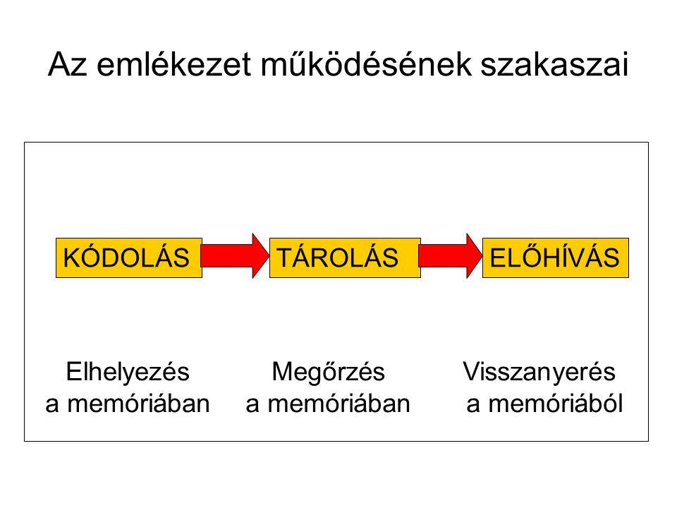 KÓDOLÁSTÁROLÁSELŐHÍVÁS Elhelyezés a memóriában Megőrzés a memóriában Visszanyerés a memóriából Az emlékezet működésének szakaszai