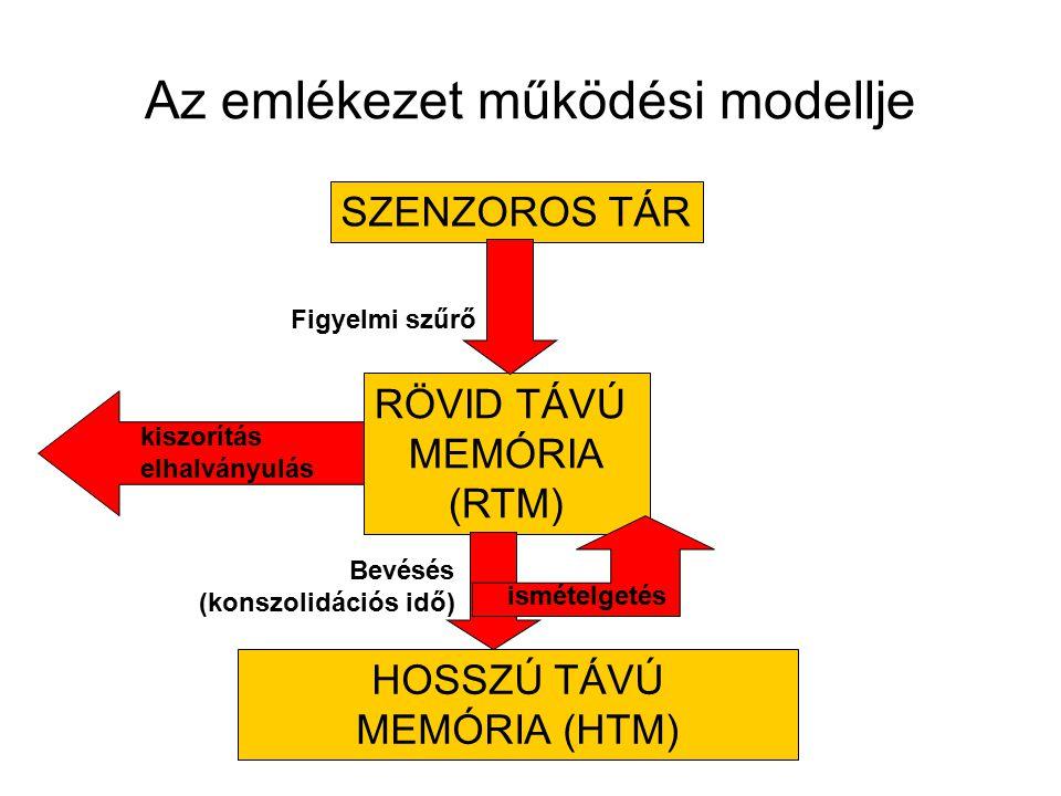 Az emlékezet működési modellje SZENZOROS TÁR RÖVID TÁVÚ MEMÓRIA (RTM) HOSSZÚ TÁVÚ MEMÓRIA (HTM) Bevésés (konszolidációs idő) Figyelmi szűrő ismételget